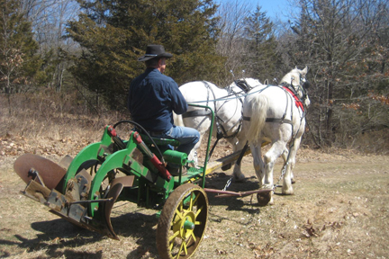 Carriage Horses / Draft Horses / Percherons / Draft Crosses